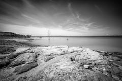 Murrell Park - Black and White (Cathy Neth) Tags: 2016inphotos 365photoproject 365project flowermoundphotographer flowermoundphotography leefilters bigstopper cathyneth cathynethphotography cnethphotography flowermoundparks lake lakegrapevine lakephotography landscapephotography landscapes longexposure longexposurephotography nature naturephotography project365 trees watermovement waterphotography blackandwhite blackandwhitephotography blackandwhitelandscapephotography
