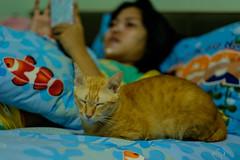 I love sleeping on the bed. ^_^' (Kantashoothailand) Tags: fujifilm xt10 xf56mmf12r cat meow neko  expression moodandatmosphere happiness money sleeping