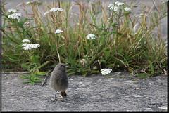 jungvogel im Nationalpark Eifel (modekopp) Tags: canoneos70d ef 100400 canoneos70def100400