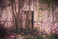 Fairlane Farm-29 (hiker083) Tags: abandoned farmhouse decay decrepit derelict cars vacant oncewashome