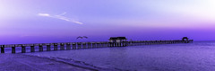 Awake At Dawn . . . (C. P. Ewing) Tags: dawn sunrise pier water gulf ocean lanscape landscapes sky blue outdoor nature natural bird birds animal animals cloud clouds sun sunshine architecture love loving naples florida mexico
