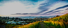 Spring, sprang, sprung (Paul-Boer Putter) Tags: capetown harbour pano hdr grass cloud sunset yellow flowers