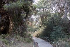 67Jovi-20160827-0043.jpg (67JOVI) Tags: albufera arboles flora racodelolla valencia
