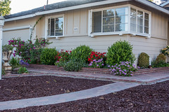 Flowers along the wall - HWW (randyherring) Tags: ca trees sidewalk window house sanjose outdoor wall evening california flowers unitedstates us