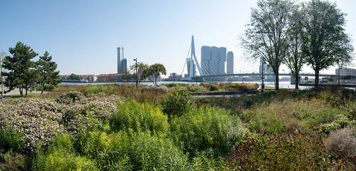 Rotterdam Leuvehoofd, Erasmusbrug
