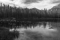 Nymph Lake Morning (Matt Thalman - Valley Man Photography) Tags: 14er colorado nationalpark nymphlake rockymountainnationalpark clouds forest lake landscape lilypads longspeak mountains trees water