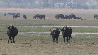 Namibia Dangerous Game Safari - Caprivi Strip 82