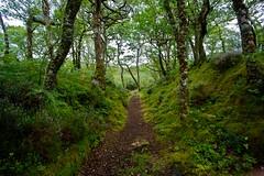 Ard Airigh, Loch Sunart (macal1961) Tags: green woodland landscape scotland oak flora colours heather remote lush oakwood footpath rare ancientwoodland scottishlandscape morvern ardery magicalwoodland ardairigh