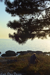 Illa de Arousa (Luis Diaz Devesa) Tags: sunset sky espaa paisajes sun color tree verde green sol beach nature water clouds spain agua rboles europa playa galicia galiza cielo nubes puestadesol pinos pontevedra illadearousa isladearosa carreirn luisdiazdevesa