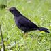 Uccello nel Recinto del Pensamiento