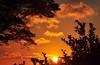 Vem... (Ruby Ferreira ®) Tags: sunset branches silhouettes pôrdosol athome galhos silhuetas notreatment brasilemimagens