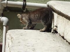 Pati (CyberMacs) Tags: cute nature animal cat turkey mammal crazy trkiye kitty places istanbul trkorszg kedi valogatni