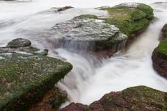 Fields of Green (mezuni) Tags: ocean sea green water moss warriewood