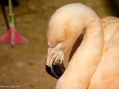 Flamingo (Marney Queiroz) Tags: nature brasil cores do natureza parana ceu foz iguacu queiroz marney panasonicfz35 marneyqueiroz