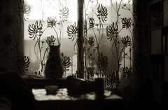 My most hated winter (O9k) Tags: home window backlight analog cat curtain zenit analogue russiancamera selfdeveloped luckyfilm helios44 homedeveloping russianlens sovietcamera sovietlens zenitc zenits thecatwhoturnedonandoff ldlnoir
