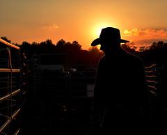 Cowboy (daphnewade) Tags: autumn sunset fall silhouette nikon cowboy country rodeo d7000
