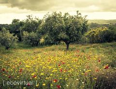 Rincones de la Toscana