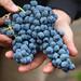 2012 Munselle Merlot Harvest 0016