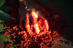 Zo'é (serge guiraud) Tags: brazil portrait festival brasil amazon para tribal exhibition exposition xingu tribe ethnic matogrosso jabiru tribo brésil plume amazonia tribu amazonie matis amazone etnic amérique xavante asurini amérindien etnia kaiapo gaviao kuarup ethnie yawalapiti kayapo javari kuikuro xerente peinturecorporelle kalapalo karaja mehinako kamaiura yawari artamérindien sudamérique tapirapé peuplesindigenes povoindigena parcduxingu parquedoxingu sergeguiraud jabiruprod expositionamazonie artdelaplume artducorps bassinamazonien amazon'stribe amazonieindidennecom basinamazonien zo'é hetohoky parqueindidigenadoxingu jungletribes populationautochtones indiend'amazonie