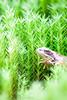 _MG_0498 (Den Boma Files) Tags: fauna dieren kikker amfibieen stropersbos