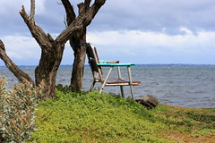 All tied up (LittleMok) Tags: tree beach water up rock bay chair day rusty australia grand victoria final trunk saltbush tied avalon geelong foldup corio 29sept12 yayswans