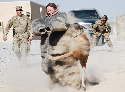 Soldier volunteers for military working dog demonstration [Image 2 of 2]