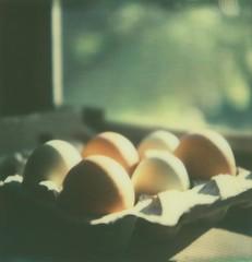 153/365 (meghan davidson) Tags: film window polaroid sx70 quiet eggs windowsill windowlight fresheggs instantfilm 365project impossibleproject px70colorprotection