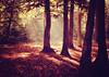 Light (ceca67) Tags: trees light nature landscape photography nikon flickr d90 ceca67 rockpaperexcellence