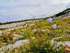 Chalk Land (CamMonkeh) Tags: flowers pits chalk nikon purple low cliffs 1116mm