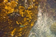 DSC09211 (andrewlorenzlong) Tags: fish coral thailand snorkeling kohchang kohrang kohrangyai korangyai