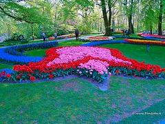 Dutch Tulips Keukenhof Holland - 0681 (HereIsTom) Tags: travel flowers flower holland nature netherlands dutch garden vakantie spring europe colours tulips sony cybershot olympus tulip bloom bloemen keukenhof tulpen webshots e500 f505