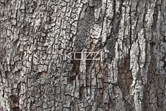 extreme close-up shot of peeled tree trunk (waconature8877) Tags: wood tree nature weather closeup season outside outdoors photography peeling day pattern unitedstates florida bare details ruin nobody nopeople deadtree treetrunk extremecloseup trunk backgrounds weathered cropped daytime fullframe staugustine baretree textured peeled obsolete rundown ruined wornout detailed partof naturalphenomenon saintaugustine colorimage naturalpattern nonurbanscene coldtemperature