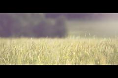 meadow (Jon Downs) Tags: orange brown white black color colour green art colors field yellow digital canon downs landscape photography eos gold photo jon flickr artist colours photographer image picture meadow pic photograph 7d thornborough jondowns