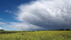 _7026229_31 (bl!kopener) Tags: belgium olympus omd mft em10 mzuiko 1836mm 918mmf4056 f4056 mirrorless microfourthirds m43 stitching stitched 2016 16x9 landscape cloud drama dramatic sky nature