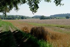 Mein Bruchsaler Hgelland (infactoweb) Tags: bruchsal eichelberg felder hgel hgelland infactoweb kraichgau wandern
