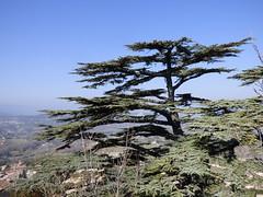Village en Lubron (thiery49) Tags: luberon village cdre arbre