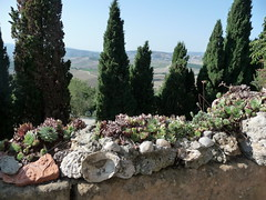 Mauerschmuck (1elf12) Tags: toskana italien italy tuscany mauer wall valdorcia zypressen plants pflanzen stones steine