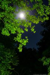 Moon through tree line at Ioannina (Rentoumis Phoography) Tags: moonlight treeline greenleaves ioannina night moon
