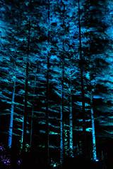 MushRmFest_593 (Lance Rogers) Tags: camera kennettsquare pa longwoodgardens nightscape nikond500 pennsylvania people places lancerogersphotoscom lancerogers
