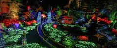 Butchart Gardens (Christmas) (Farzad) Tags: vitoria bc britishcolumbia butchart garden gardens light trees night