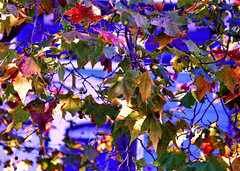 November Day (Rob Goldstein -Thanks for your support) Tags: sanfranciscophotography nature earth fineart canon vibrant autumn leaf light vivid texture raw best awesome urban urbex foto artbyrobgoldstein