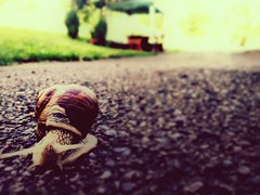 Slowly (rolandeschain_) Tags: animal animali snail lumaca italy italia slow