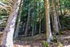 DSC_9511 (Costi Jacky) Tags: france naturereserve parcdemerlet