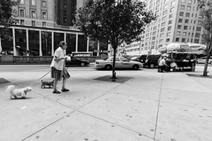 New York (shaymurphy) Tags: street new york old city nyc sky woman ny dogs america buildings walking américa nikon small amerika stad scraper アメリカ d300 美国 미국 纽约 америка lamerica lamérique πόλη τησ ニューヨークシティ αμερική dsc9451 뉴욕시 νέασ υόρκησ
