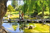 Reflection Of Tranquil Green Serene + Mother And Son (Sunciti _ Sundaram's Images + Messages) Tags: california reflection tree green nature garden japanesegarden sanjose brightspark beautifulexpression anawesomeshot colorphotoaward aplusphoto agradephoto flickraward brillianteyejewel hollowpark poolpond brilliantphotography elitephotgraphy artofimages capturethefinest