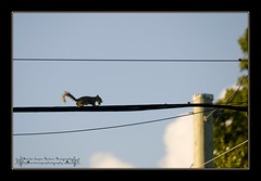 I feel Autumn in the air (the_coprolite) Tags: canada nikon squirrel bc britishcolumbia sigma burnaby d300 120400mm