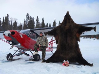 Alaska Bear Hunt and Moose Hunt - Dillingham 13