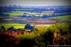 Aberdeen City (Rick Ellerman) Tags: city scotland branch arty aberdeenshire hill picasa aberdeen