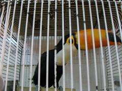 china hk hongkong toucan birdcages petbirds goldenmile songbirds yuenpostreet livepets traditionalchinesemarket hkstreetmarket tsimtsatsuidistrictkowloon kowlooncommercialdistrict birdmarketkowloon aviaryequipment