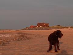 Brancaster beach (silvercelicadave) Tags: sunset sea sky beach norfolk panasonic brancaster fz48